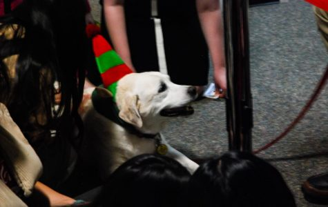 Comfort dogs relax students before finals
